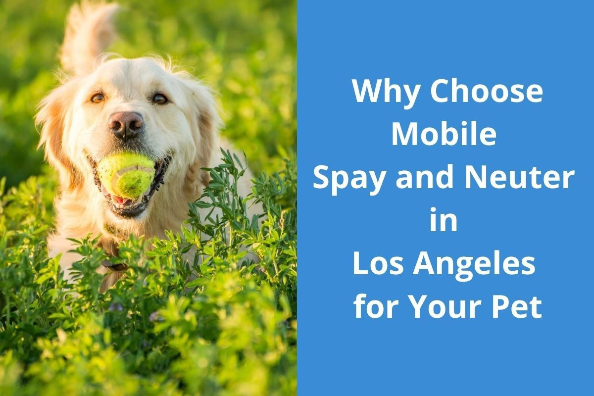 Why Choose Mobile Spay and Neuter in Los Angeles for Your Pet