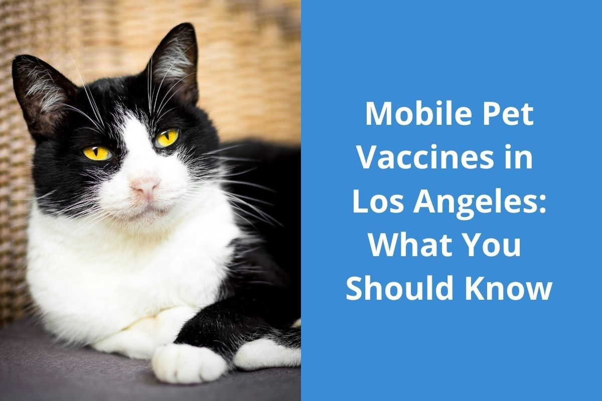 Mobile Pet Vaccines in Los Angeles: What You Should Know