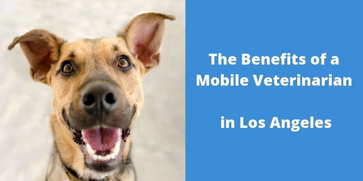 The_Benefits_of_a_Mobile_Veterinarian_in_Los_Angeles_