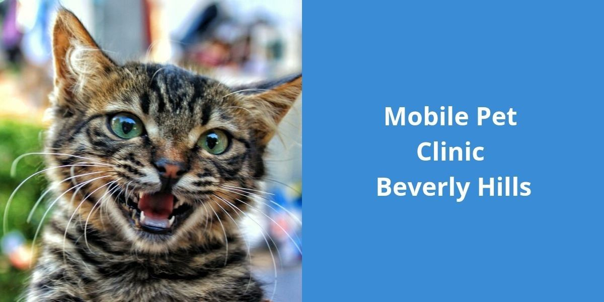 Mobile Pet Clinic Beverly Hills
