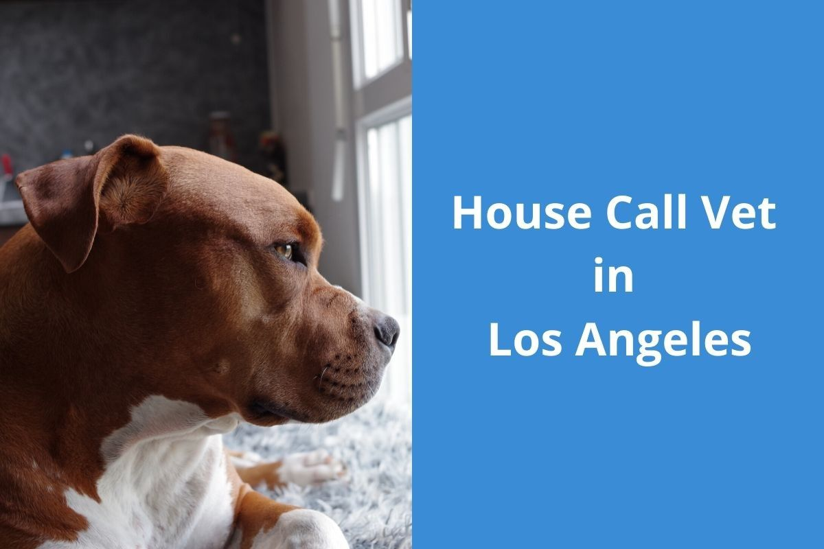 House Call Vet in Los Angeles