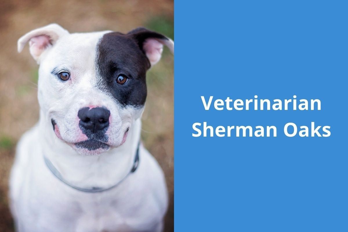 Veterinarian Sherman Oaks